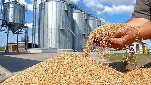 grain wheat harvest